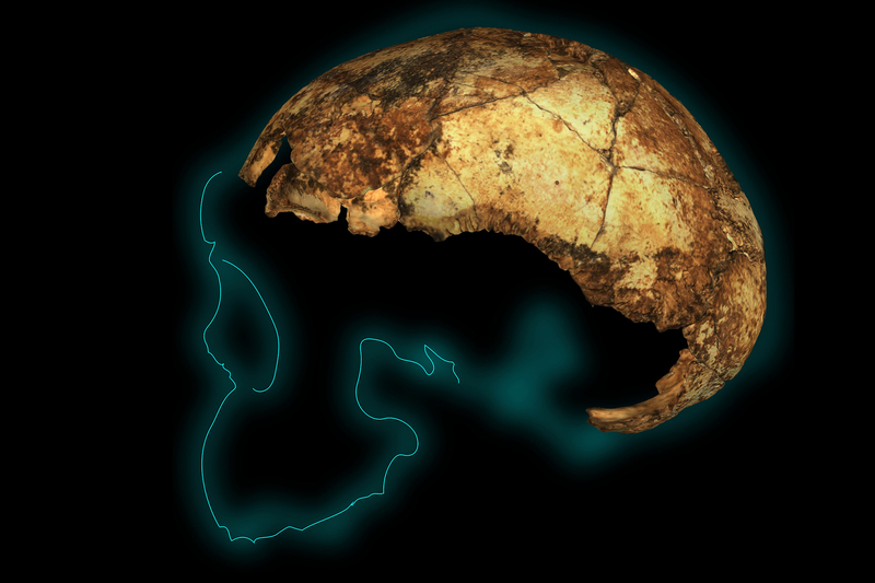 2 million-year-old ancient fossil Homo erectus unearthed