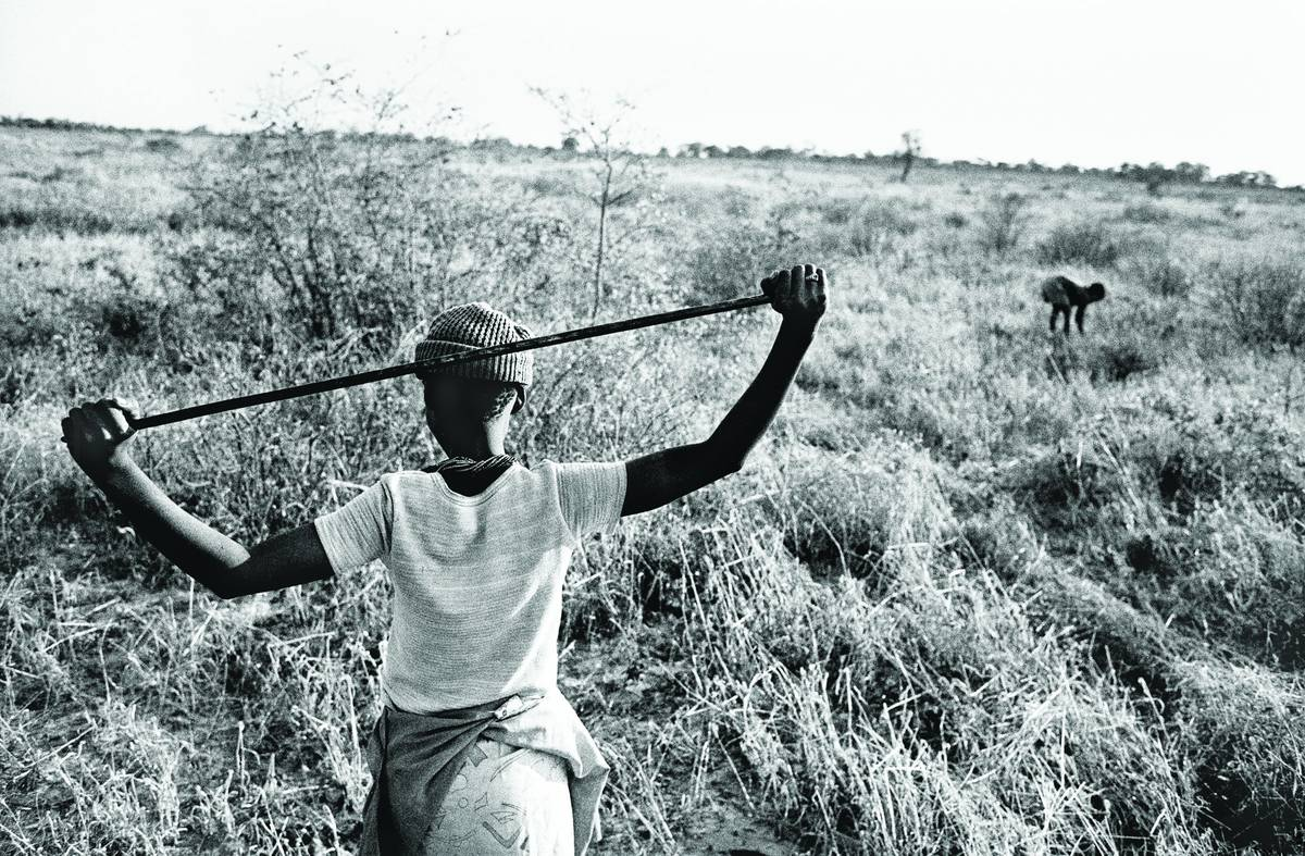 Gathering veld food, Namibia, 1986