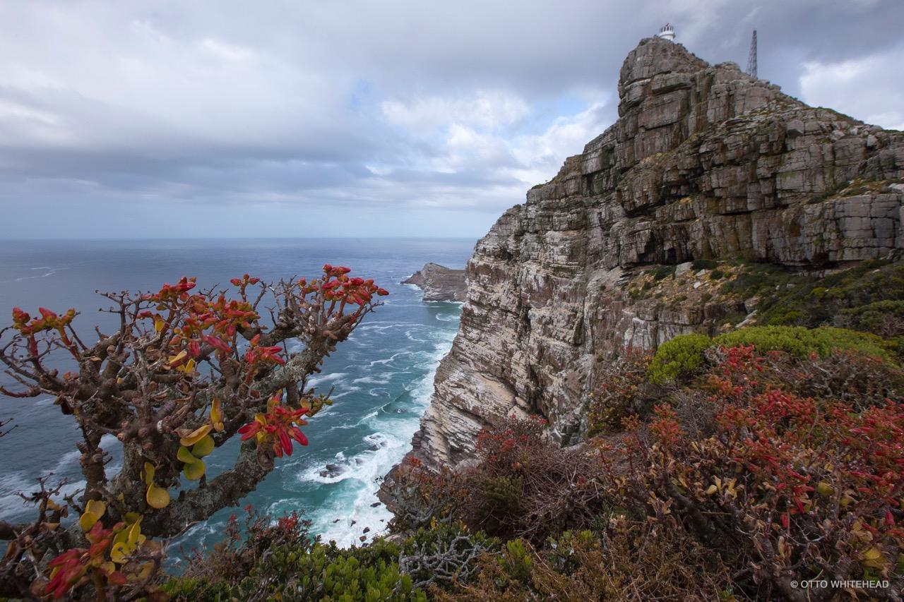 declining fynbos diversity
