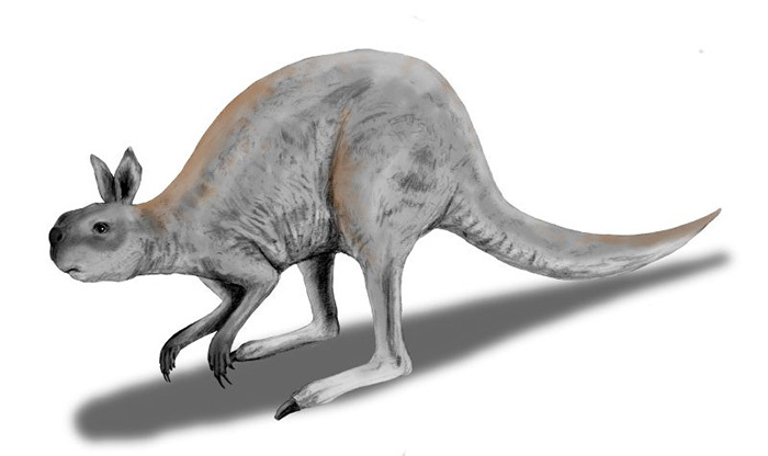 This image of the Procoptodon goliah, the giant short-faced kangaroo that lived during the Pleistocene in Australia, was pencil-drawn and digitally colourised by Nobu Tamura.