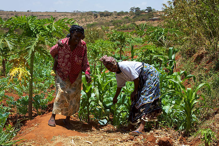 "Smallholder farmers in Kenya. <b>Photo</b> <a href=""http://commons.wikimedia.org/wiki/File:Women_smallholder_farmers_in_Kenya.jpg#mediaviewer/File:Women_smallholder_farmers_in_Kenya.jpg"" target=""_blank"" style=""font-weight: normal;"">McKay Savage from London, UK</a>."
