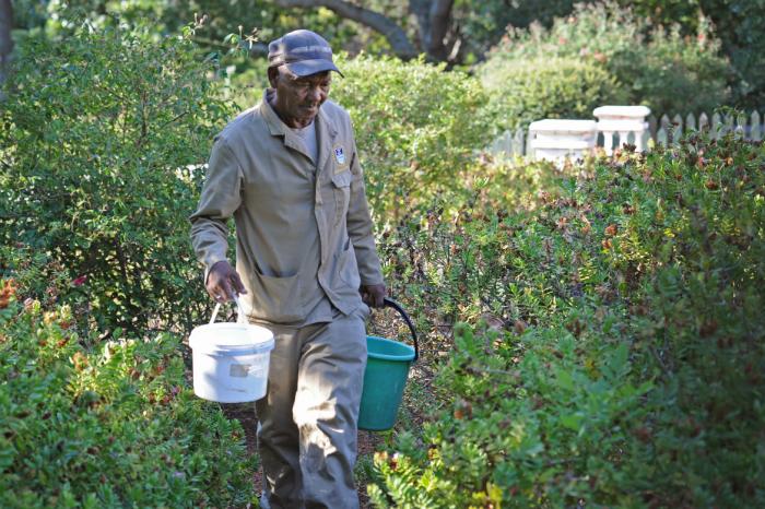 Gardener Jonathan Fritz irrigates a campus garden using buckets.