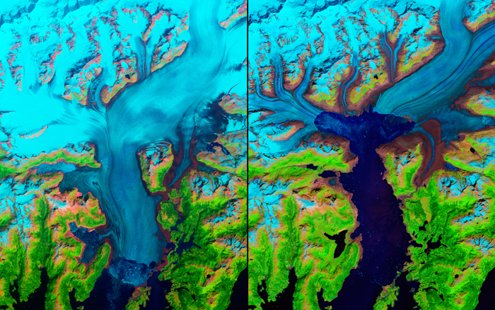 These false-colour images of Alaska's Columbia Glacier from 1986 (left) and 2011 (right) show its retreat of more than 20 kilometres. Since the 1980s, it's lost about half of its total thickness and volume. Snow and ice appears in bright cyan, vegetation is green, clouds are white or light orange, and the open ocean is dark blue. Exposed bedrock is brown, while rocky debris on the glacier's surface is gray.