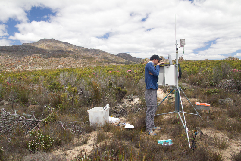 Out there: PhD student and botanist Rob Skelton downloading sap flow and weather data from a station at Jonaskop in the Riviersonderend Mountains. Sap flow sensors (which measure the flow of water through a plant) and meteorological sensors allow Skelton to monitor both plant functionality and weather conditions almost continuously.