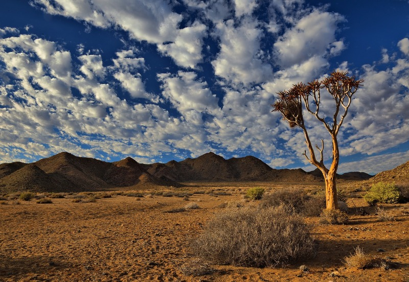 The /Ai/Ais-Richtersveld Transfrontier Park spans some of the most spectacular arid and desert mountain scenery in southern Africa.