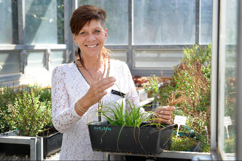 Prof Jill Farrant has studied how resurrection plants can survive in the face of extreme water loss, aiming to introduce these characteristics into smart crops that will feed Africa in the face of climate change and increasing and extended drought.