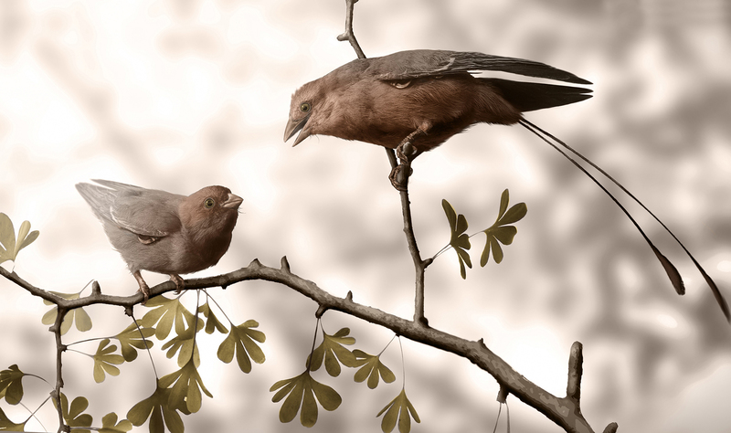 A reconstruction of male and female Confuciusornis birds.