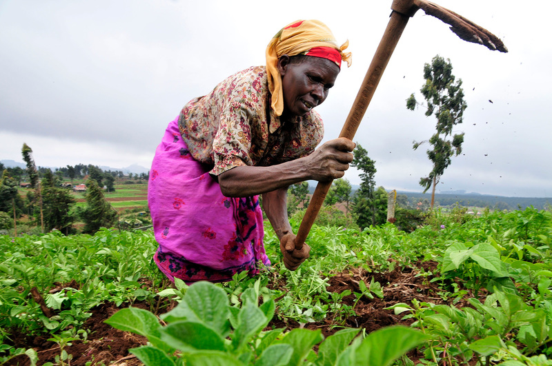 South Africa has industrialised farmers as well as those who are resource-poor and who practice low-input agriculture. This puts the country in a unique position to strengthen applications well suited to the challenges facing smallholder farmers.