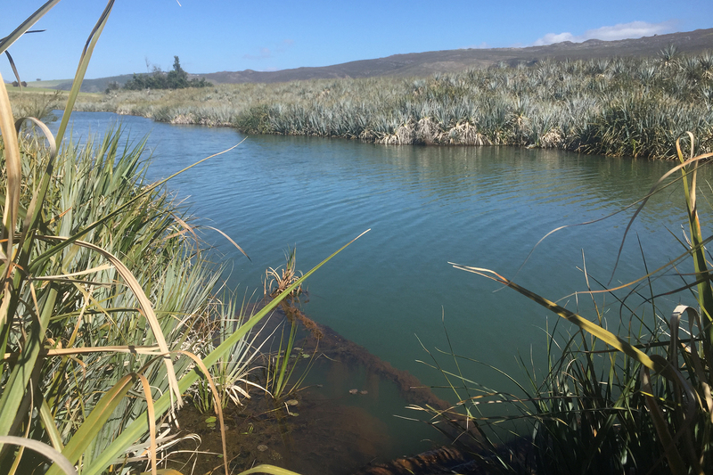 The researchers are working at six primary study sites, including in the Berg-Breede (Western Cape). The catchment contains strategic water source areas upstream, and supports the major metropolitan city of Cape Town downstream.