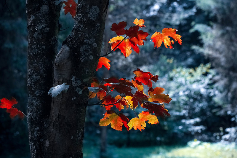 Yacoob Manjoo reflects on COVID-19 while tying his poem to the changing seasons.