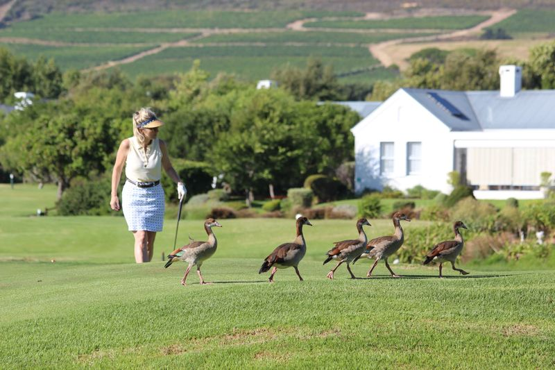 Both golfers and non-golfers agree: the goose population on Cape Town's golf courses needs to be reduced by at least 50%.