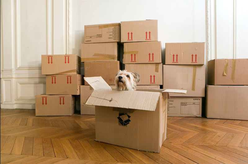 "Tiang Moabelo said that he used the nationwide lockdown to reposition his business. <strong>Photo </strong><a href=""https://www.gettyimages.com/detail/photo/dog-in-cardboard-box-in-empty-house-royalty-free-image/75393958?adppopup=true"" target=""_blank"">Getty Images</a>."