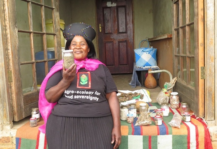 Ntombithini Ndwandwe, an agroecology farmer displaying her diversity of traditional seeds in Zimele, KwaZulu-Natal.