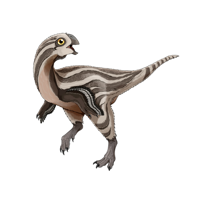 An artist's reconstruction of the new dinosaur, Gobiraptor minutus.