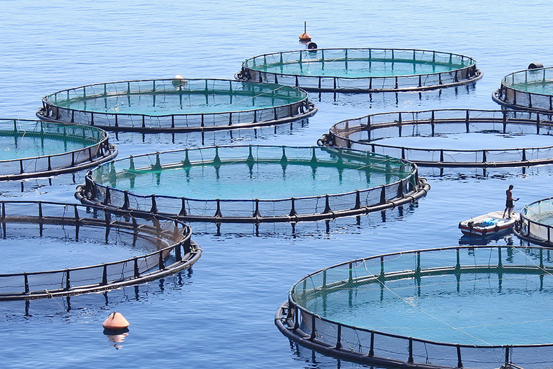 Aquaculture has the potential to provide much-needed food security, create job opportunities and boost local business prospects throughout Africa.