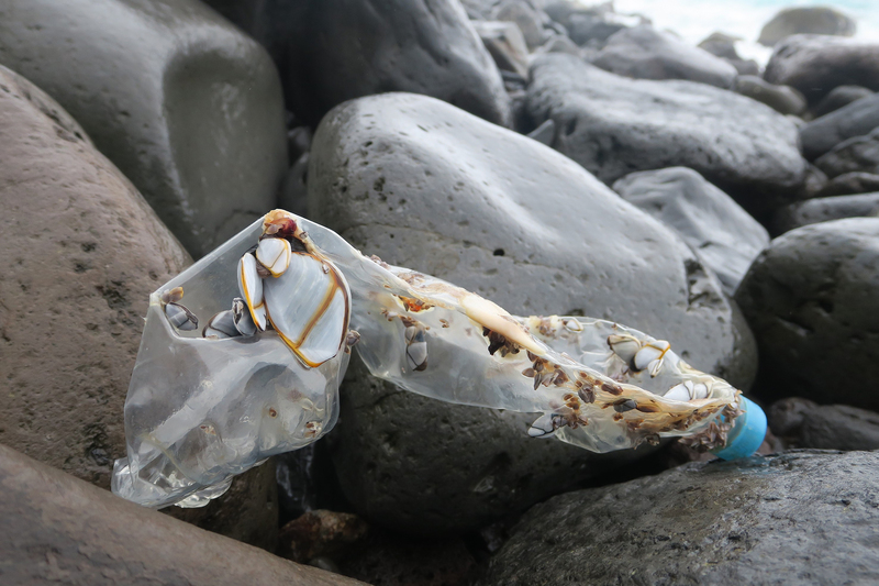 A plastic bottle freshly stranded on Inaccessible Island. The most recently manufactured bottles that wash up on the island, most of which come from Asia, seldom carry goose barnacles like this, suggesting they have not been at sea for very long.