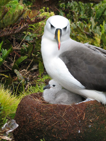 seabird chicks