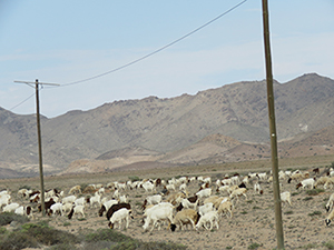 Stock farming in the /Ai/Ais-Richtersveld Transfrontier Park.
