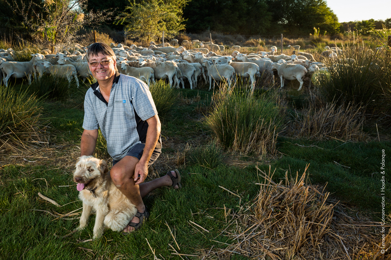 A Karoo sheep farmer in the Laingsburg Municipality District, Central Karoo, poses with his sheep and his livestock guarding dog.