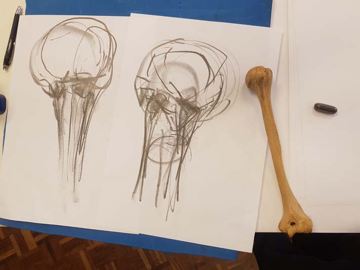 Touch, sight and marks on paper were used to explore and understand the form and detail of the humerus.